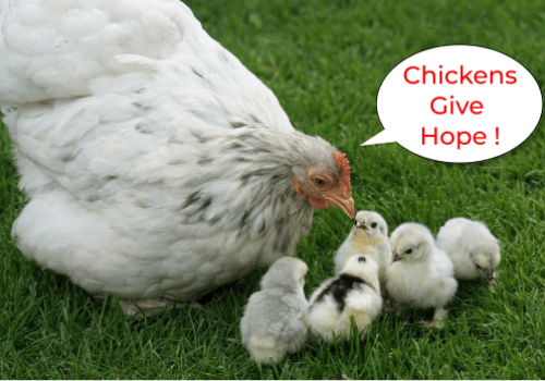 Chickens Give Hope
