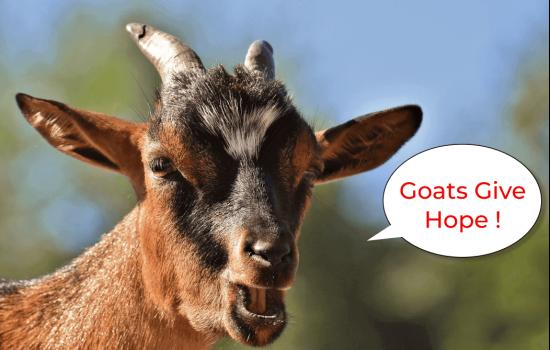 Goats Give Hope-2