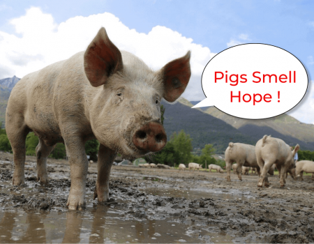 Pigs Smell Hope