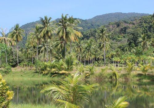 Trees in Haiti
